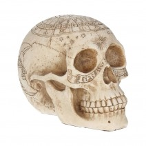 Astrological Skull Engraved With The Zodiac Circle 20cm