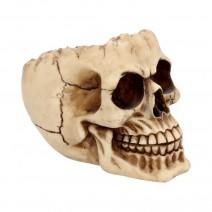 Lobo Skull Trinket Box 14.5cm